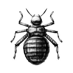 Black and white vector abstract beetle hand-drawn in the style of vintage etchings