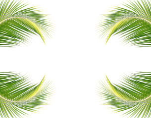 palmes sur fond de page blanche