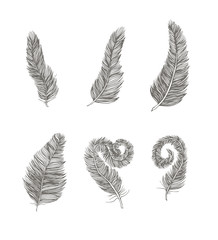 Feather set line drawing element