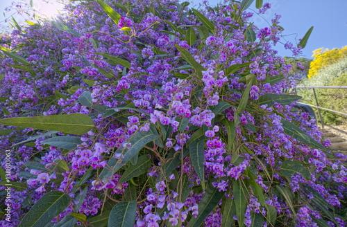 arbuste a fleur violette bormes les mimosas france provence photo libre de droits sur la. Black Bedroom Furniture Sets. Home Design Ideas