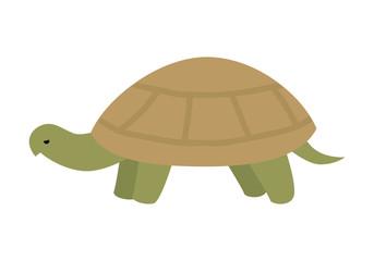 Turtle Vector Illustration in Flat Design