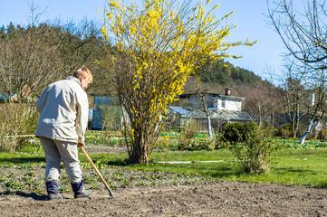 Gardener raking soil with garden tool, spring gardening