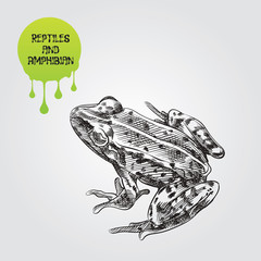Frog hand drawn sketch isolated on white background and green blob with drops. Reptiles and amphibian sketch elements vector illustration.
