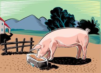 Pork, while eating in the manger.