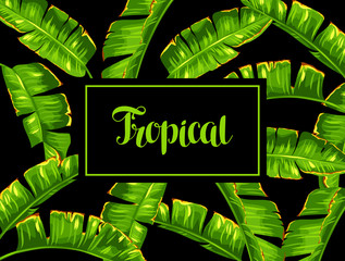 Background with banana palm leaves. Decorative tropical foliage