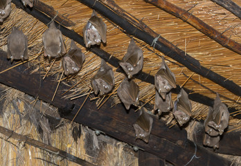 wild bat animals on the roof