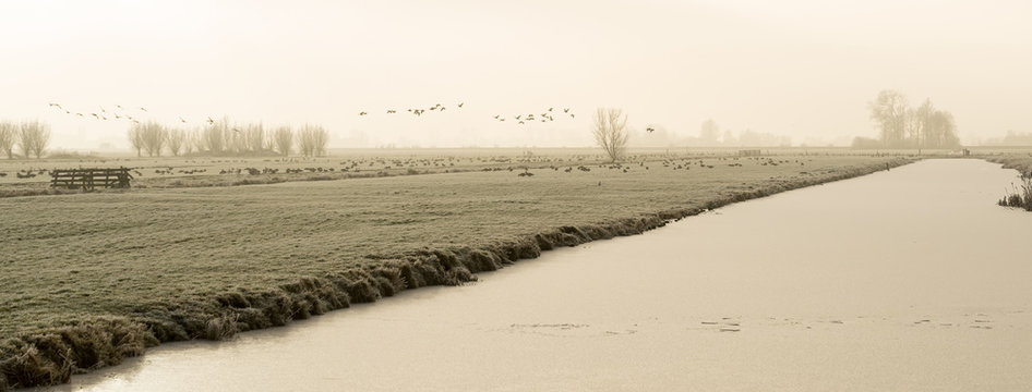 Frozen polder landscape with a ditch in The Netherlands