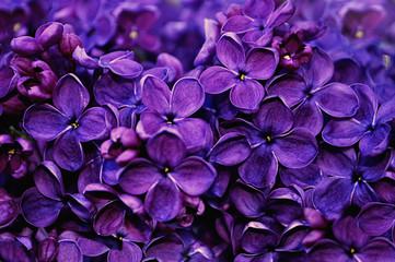 Photo sur Aluminium Lilac Lilac flowers, spring floral background