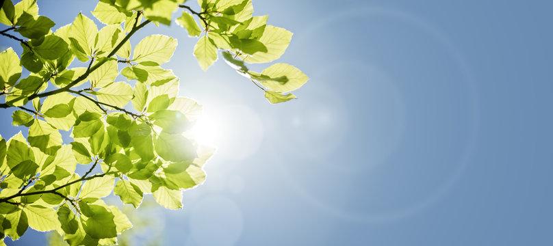 Spring leaf background