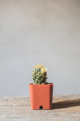 Little beautiful cactus  wood background , hipster tone