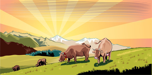 Mountain agricultural landscape with cows in a meadow, intent to graze the grass. Wall mural
