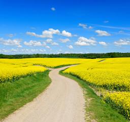 Fototapete - Feldweg durch blühende Rapsfelder, blauer Himmel mit Wolken