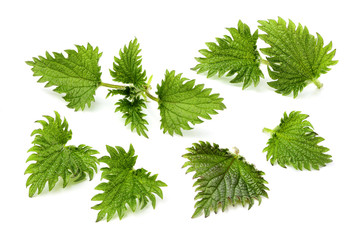 Collage of nettle leaves.