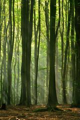 Stimmungsvolles Licht im Wald, Sonne und Nebel zaubern eine geheimnisvolle Atmosphäre
