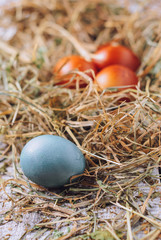 Easter eggs in a hay. close up and selective focus. toned picture
