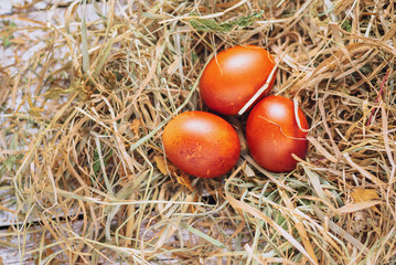 Easter eggs in a hay. close up and selective focus. top view and space for text. toned picture
