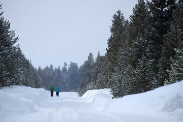People Walking Through Snow in Mountain Wilderness Pine Forest