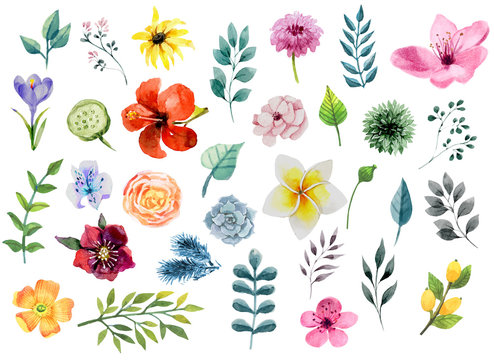 Watercolor floral elements set