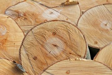 Holz-Strukturen: Querschnitte frisch gefällter Buchenstämme