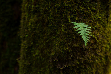 Green leaf growing from mossy tree trunk