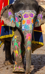 Wonderful painted Elephant, Amber Fort, Jaipur, India