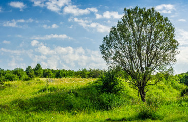 tree in rural area on beautiful summer day