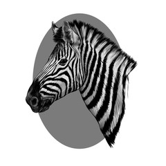 a Zebra head profile sketch vector with the grey circle