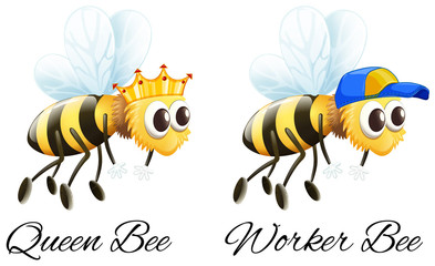 Queen bee and worker bee characters