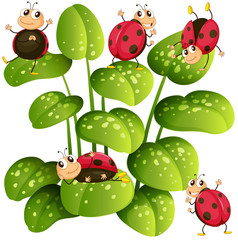 Ladybugs on green leaves