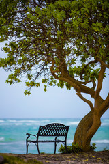 Fototapete - sitting by the ocean