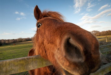 Funny horse close-up