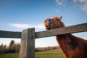 Funny horse close-up
