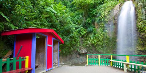 jungle colors st lucia