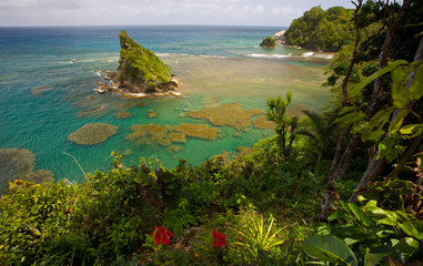 fabulous reef view in dominica