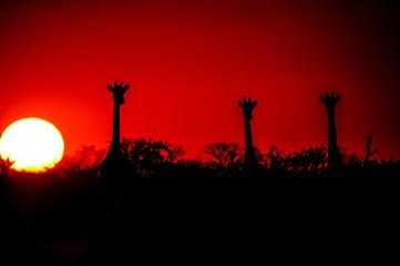 Sunset Girafe
