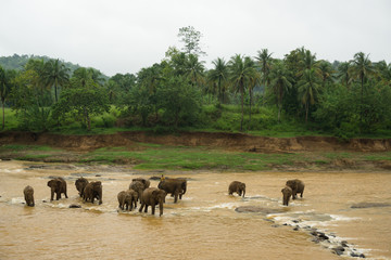 Pinnawala