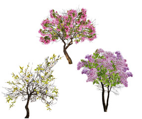 set of three blossoming trees isolated on white