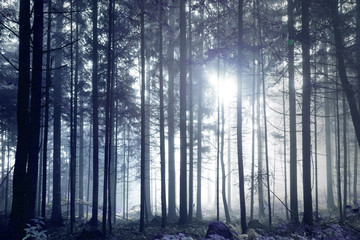 Wall Mural - Fantasy dark blue foggy forest tree landscape.