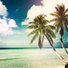 Fototapete - nature tropical background with coconut palm
