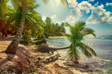 Wall Mural - Beach with coconut palm,  uninhabited tropical island