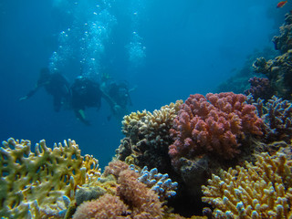 Underwater shoot of people diving with scuba near beautiful colorful reef