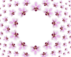 Top view of floral pattern made by many beautiful fresh flowers of purple orchid isolated on white background with copy space in middle of image. Flat lay.