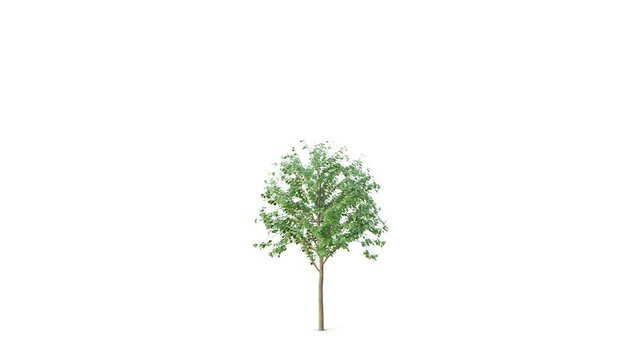 Growing Tree Animation Photos Royalty Free Images Graphics Vectors Videos Adobe Stock Find & download free graphic resources for trees cartoon. growing tree animation photos royalty