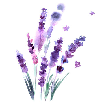 Watercolor hand painted lavender flowers on white background. Invitation. Wedding card. Birthday card.