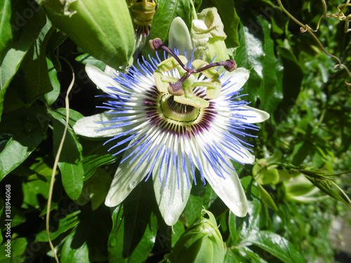 Необычный цветок и описание 35