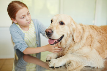 Small red-haired owner petting her cute retriever lying on table quietly with its tongue out while waiting for veterinarian