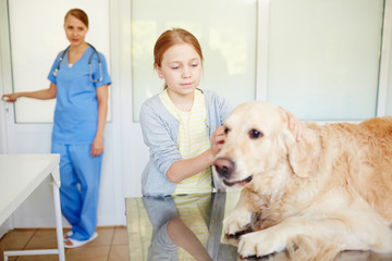 Red-haired girl standing beside her old white labrador and stroking its head before medical check-up