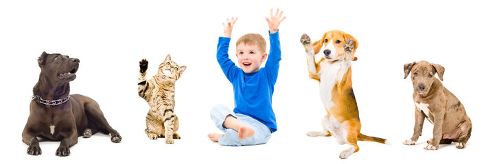 Group of cheerful pets and child together isolated on white background