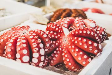 Japan, Tokyo, Tsukiji fish market, octopuses