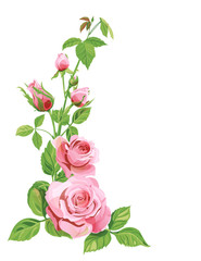 Bouquet of roses, pink, red flowers and buds, green leaves on white background, digital draw illustration, concept for design, vector
